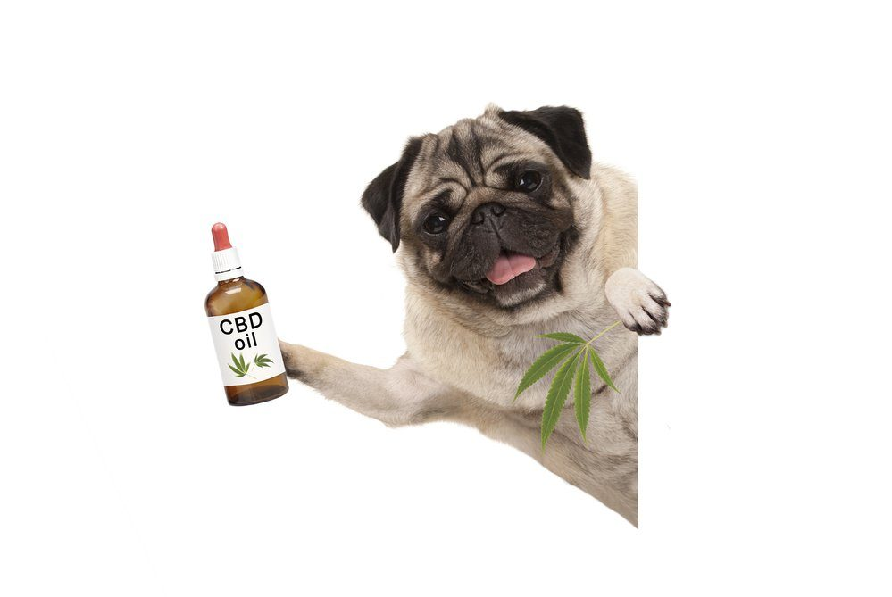 CBD products for pet