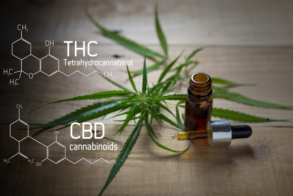 differences between CBD THC